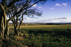 northumberland-fields-1380948-639x426 (1)