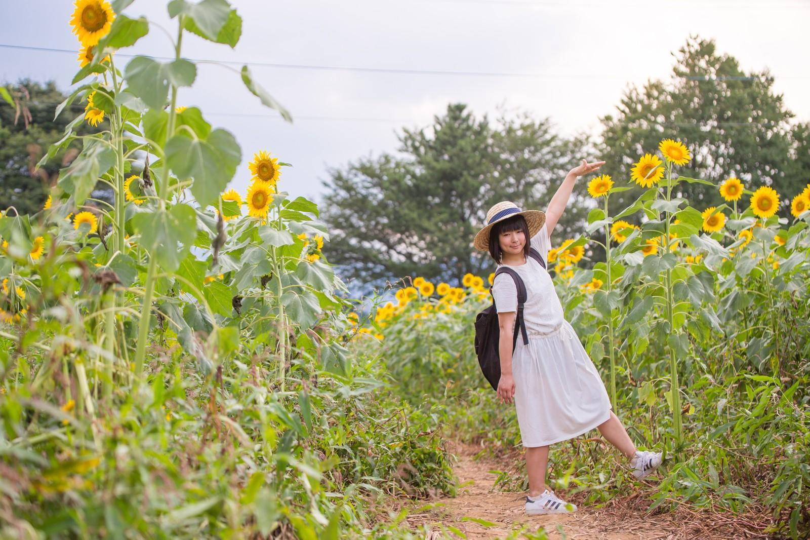 TSU18_setakeyoritakaiihmawari_TP_V